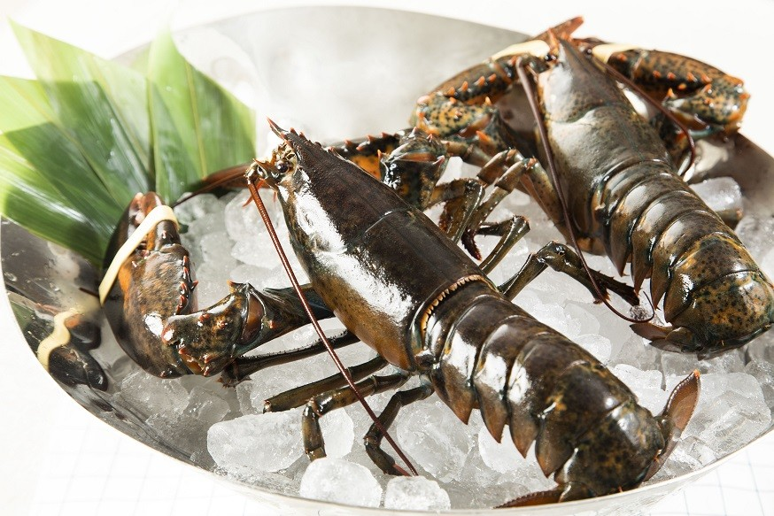 活波士頓龍蝦 Live Boston Lobster 1磅 (每磅)