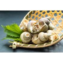加拿大熟翡翠螺 Canadian Cooked Jade Whelk (每磅)